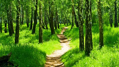 peaceful forest